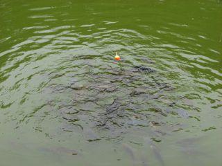 KIDSDOM/釣り