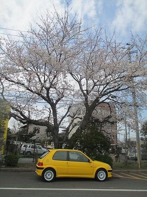 s-askurasakura 001.jpg