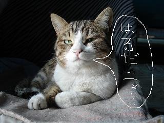 s-bibibibibi-to02-21 002.jpg